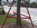 Cột chống cây
